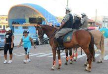 Lei Nanquim permite adoção de cavalos e cães que atuam no policiamento (RS)